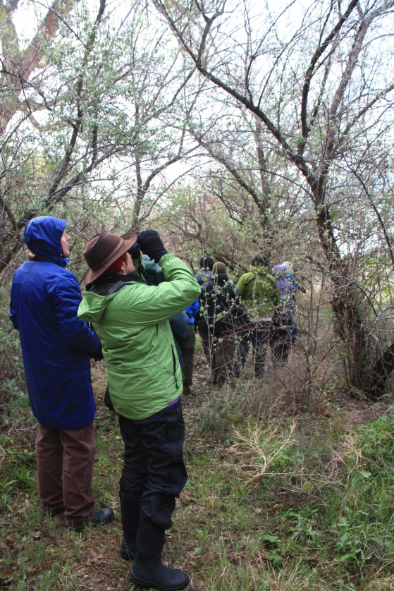 Chico Basin Ranch birding